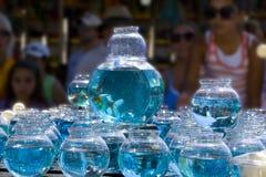 Gane un pescado del oro Imágenes de archivo libres de regalías