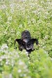 Ganesha da pedra Ídolo de Ganesha Foto de Stock