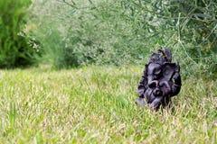 Ganesha de la piedra Ídolo de Ganesha Fotografía de archivo