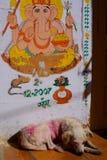Ganesha painting near a dog sleeping. Jaisalmer Fort. Rajasthan. India Stock Photos