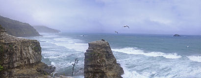 Ganet岩石Horuhoru,新西兰 免版税库存图片