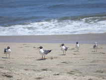 The Gang is all here. A nice shot of a group of friendly seagulls enjoying the perfect beach weather. Shot taken at Point Pleasant Beach in NJ Stock Photography