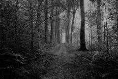Gang in bos blaton België stock afbeeldingen