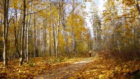 Gang in de herfstbos stock videobeelden