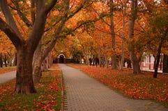 Gang in de herfstpark stock afbeeldingen