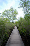 Gang de mangroven Royalty-vrije Stock Afbeelding