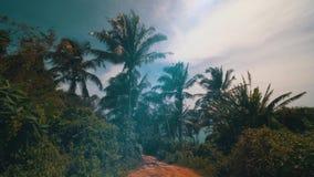 Gang in de tropische wildernis stock footage