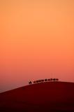 Gang in de woestijn stock afbeelding
