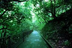 Gang die de boom op dichtheid bevatten binnen het Nationale Park Royalty-vrije Stock Afbeelding