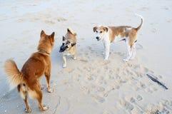 Gang of dogs Stock Photos
