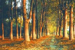 Gang door het de herfstbos royalty-vrije stock afbeelding
