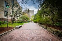 Gang en gebouwen bij Ryerson-Universiteit, in Toronto, Ontario Royalty-vrije Stock Afbeelding