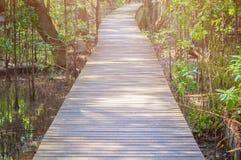 Gang houten brug in natuurlijk mangrove bosmilieu bij Chanthaburi-reis Thailand Royalty-vrije Stock Afbeeldingen