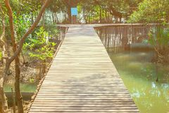 Gang houten brug in natuurlijk mangrove bosmilieu bij Chanthaburi-reis Thailand Stock Foto's
