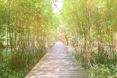 Gang houten brug in natuurlijk mangrove bosmilieu bij Chanthaburi-reis Thailand Royalty-vrije Stock Fotografie