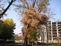 gang langs de weg van het stadspark in de mening van de de herfstmiddag van de mooie tamariksstruik stock foto