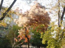gang langs de weg van het stadspark in de mening van de de herfstmiddag van de mooie tamariksstruik royalty-vrije stock foto