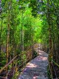 Gang in mangroven royalty-vrije stock foto