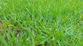 Gang op groen gras royalty-vrije stock afbeeldingen