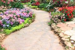 Gang in tuin met achtergrond van aard de kleurrijke sierbloemen stock afbeelding