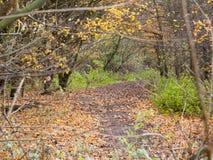 Gang van de de herfst de bosweg door de donkere grond van manier gele bladeren Royalty-vrije Stock Fotografie