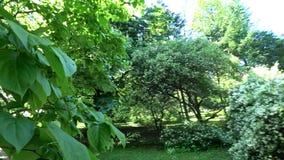 Gang voorbij groene bomen in motie De camera beweegt zich voorbij het groen 4K stock videobeelden