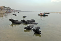 Ganga River at Benaras Royalty Free Stock Photos