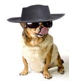 Gangdog imagens de stock royalty free
