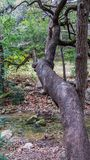Gangly drzewny skrzyżowanie nad małym rzecznym strumieniem i dojechanie obraz stock