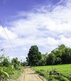 Gangplattelander een boom en een mooie hemel Royalty-vrije Stock Fotografie