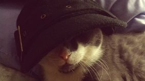 Gangster Speedy Cat in hat Stock Images
