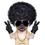 Gangsterhund Royaltyfri Bild