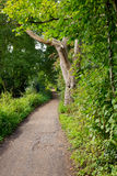 Gangweg in de sleep van de parkstijging bij waterkanalen in Woking, Surrey Royalty-vrije Stock Fotografie