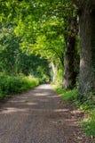 Gangweg in de sleep van de parkstijging bij waterkanalen in Woking, Surrey Royalty-vrije Stock Afbeeldingen