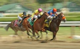Ganhando Evan Shipman Stakes em Saratoga Imagens de Stock Royalty Free