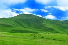 gannan berg s tibet Arkivfoton