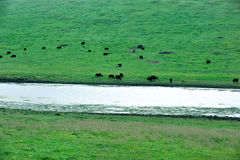 gannan obszar trawiasty s Tibet Obraz Stock