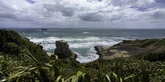 Gannet殖民地在奥克兰附近的Muriwai海滩 图库摄影