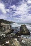Gannet殖民地在奥克兰黑色沙子海滩附近的Muriwai海滩 免版税库存图片
