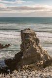 gannet殖民地岩石Muriwai海滩的 库存图片