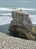 gannet 1 rock Obrazy Royalty Free