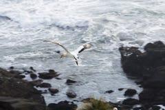 gannet Стоковые Фотографии RF
