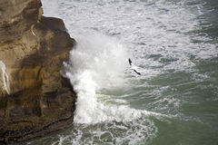 Gannet Flying Among Crashing Waves. Gannet flying among the crashing waves. At Muriwai beach Auckland, New Zealand Stock Photo