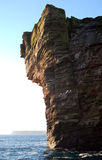 gannet klifu Zdjęcie Royalty Free