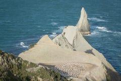 Gannet kolonia przy przylądków porywaczami Fotografia Stock