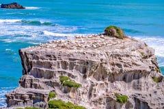 Gannet-Lebensraum stockfotografie