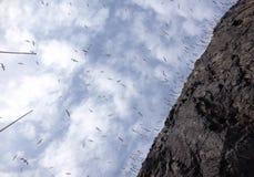 Gannets przy wierzchołkiem bas skała Fotografia Stock