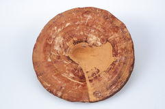 Ganoderma Royalty Free Stock Image