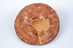 Ganoderma royalty free stock image