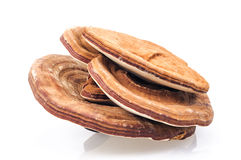 Ganoderma Stock Photos